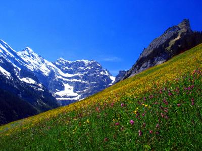 polacy w szwajcarii