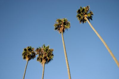 Los-Angeles-Palm-Trees