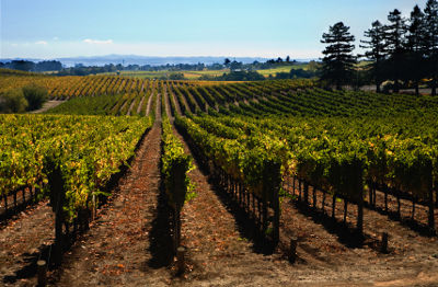 sonoma-winery-northern-california
